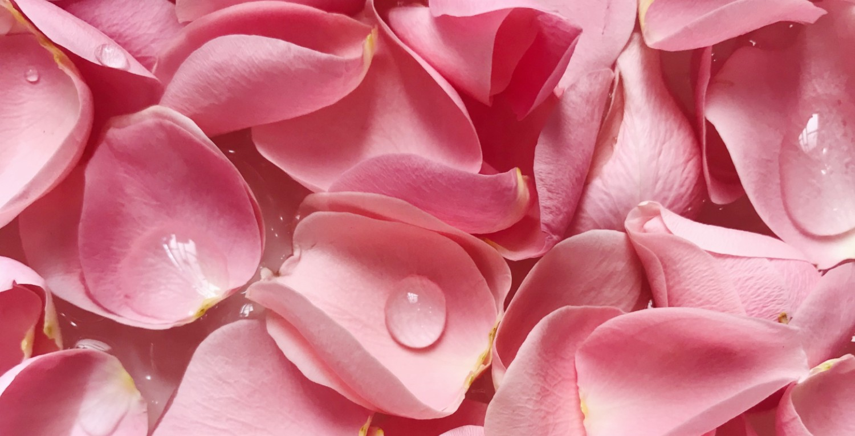 elaborar-agua-de-rosas-en-casa